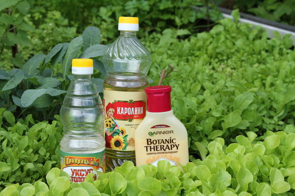 Шампунь, растительное масло и уксус нужно смешать в равных пропорциях