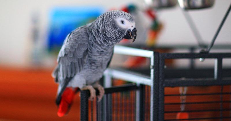Попугай-транжира чуть не разорил хозяйку, делая покупки через интернет