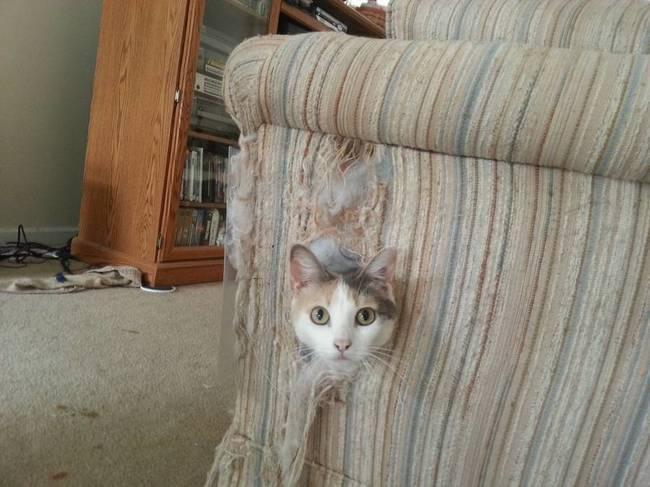 Когда кот намекает, что пора бы уже выкинуть этот диван