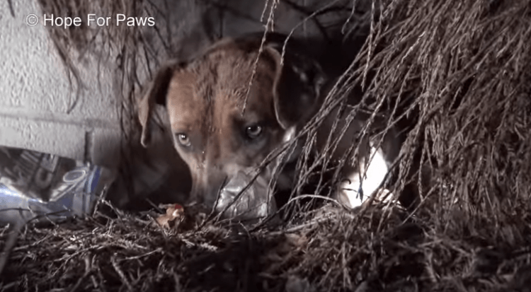 Собака провожала поцелуем каждого щенка, которого забирали люди