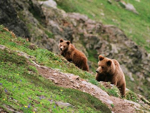 Картинки по запросу байкальский заповедник фото