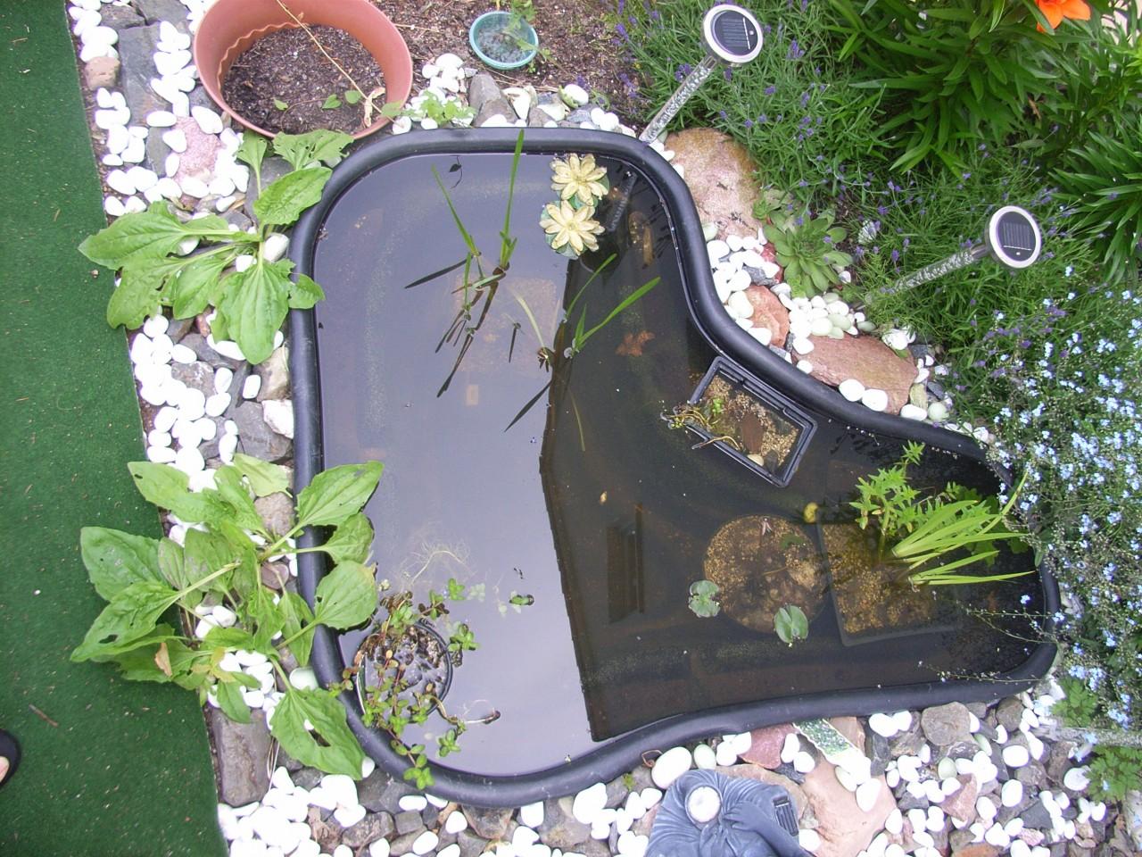 Пруд и водные растения