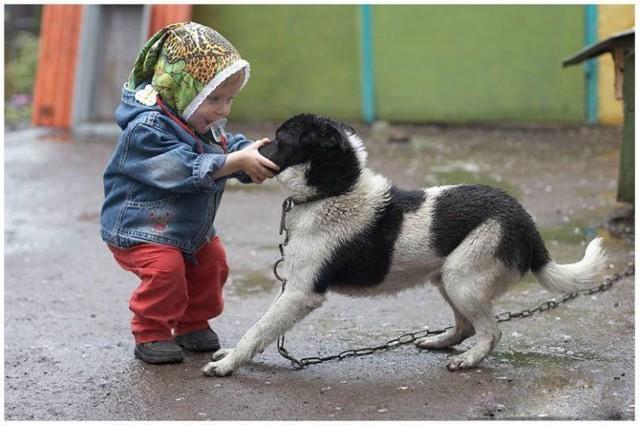 Скандалы вокруг детей и животных