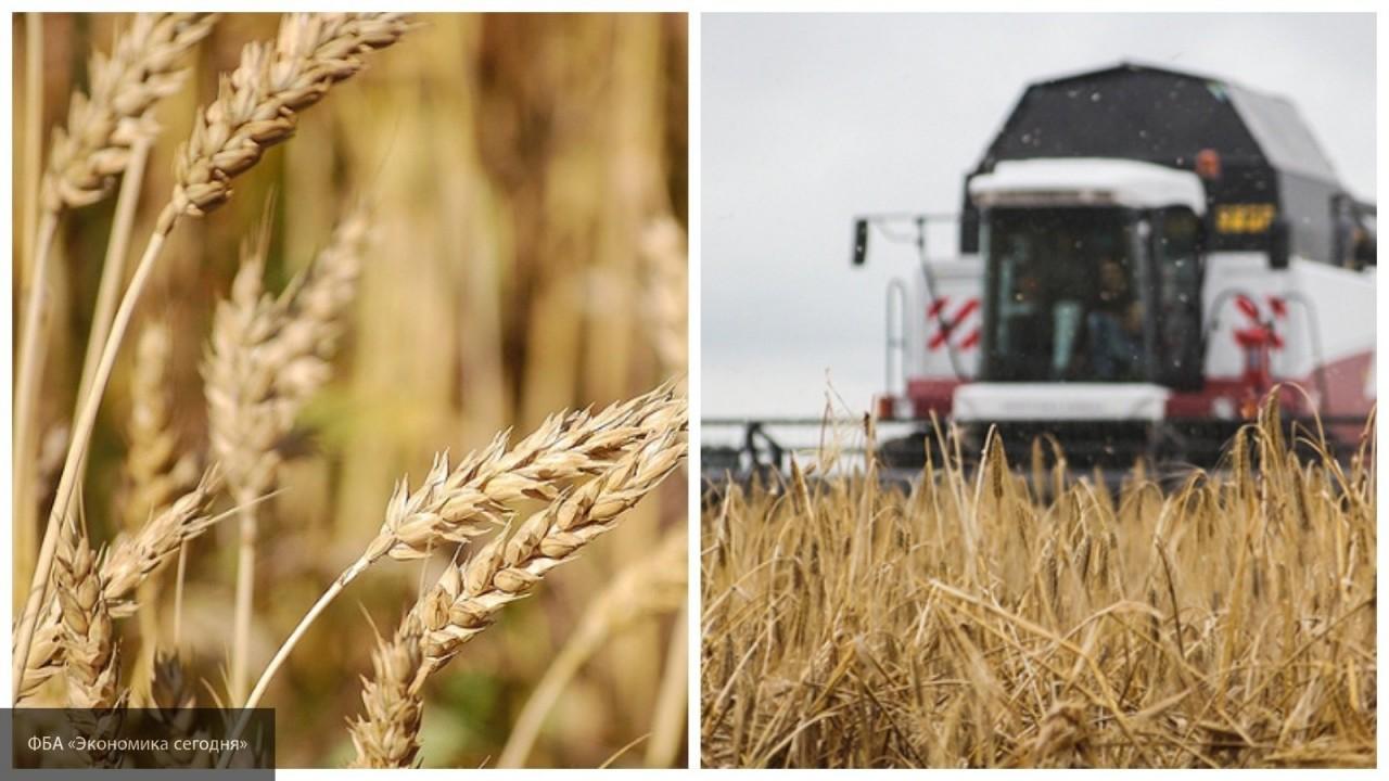 Bloomberg о России и торговой войне: что нужно знать про зерновой рынок