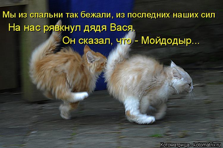 Котоматрица: Мы из спальни так бежали, из последних наших сил На нас рявкнул дядя Вася. Он сказал, что - Мойдодыр...
