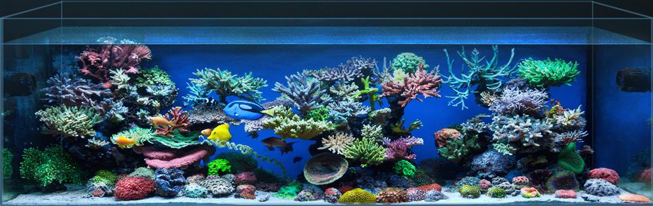 Как обустроить домашний аквариум