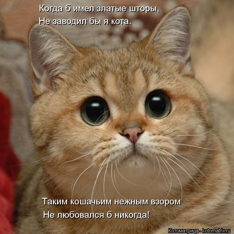 Котоматрица: Когда б имел златые шторы, Не заводил бы я кота. Таким кошачьим нежным взором Не любовался б никогда!