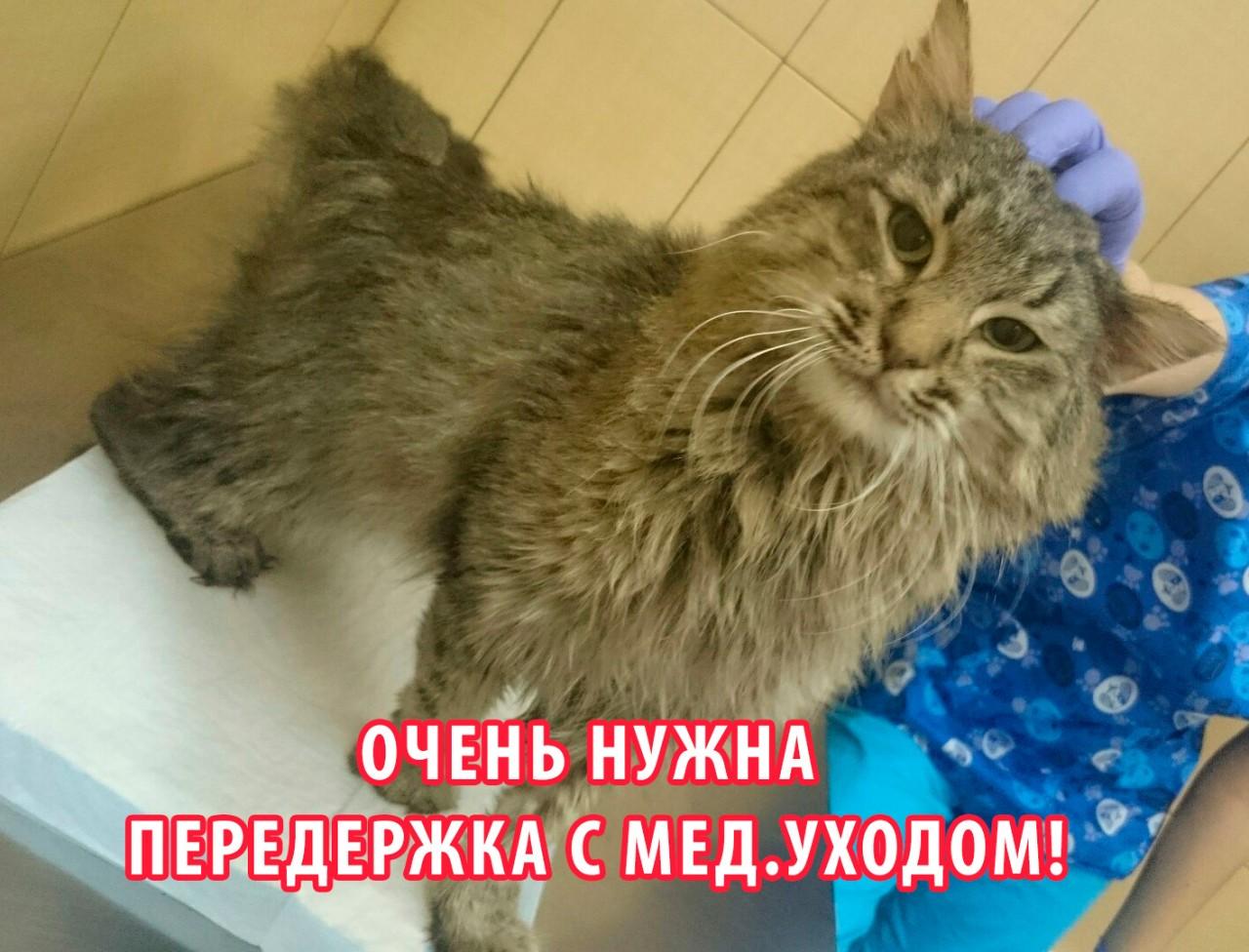 Москва. ИЩЕМ ПЕРЕДЕРЖКУ С МЕД.УХОДОМ КОТИКУ ЗЕВСУ.
