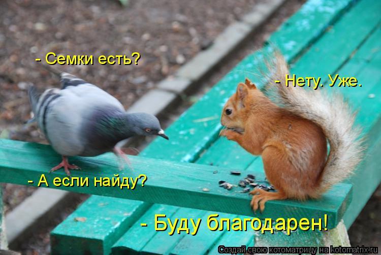 Котоматрица: - Семки есть?  - Нету. Уже.  - А если найду?  - Буду благодарен!