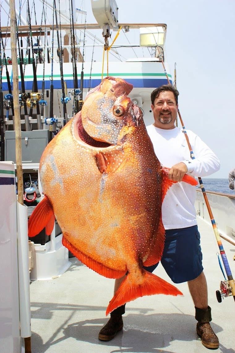 Некоторые из них действительно огромны морские монстры, рыбалка, рыбы
