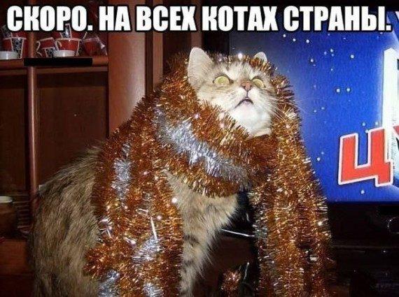 Котоматрицы на Новый год
