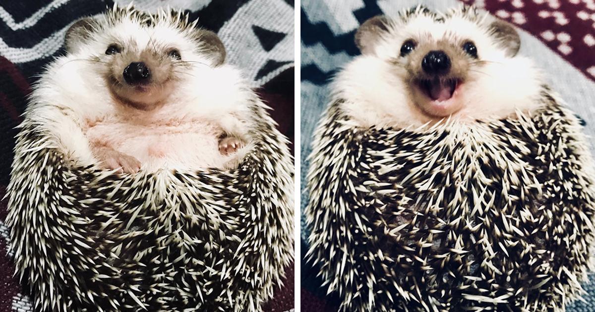 Meet Rick, The Happiest Hedgehog From Ukraine