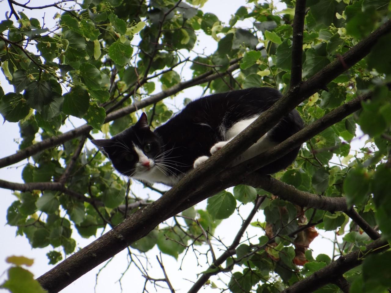 Кошка решила, что она птица и переехала жить в гнездо!