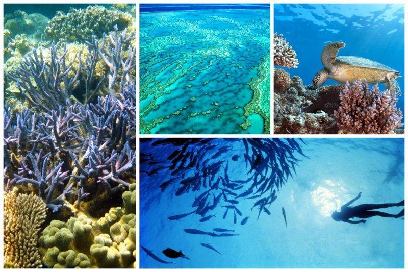 Над Большим Барьерным рифом установят защитный экран