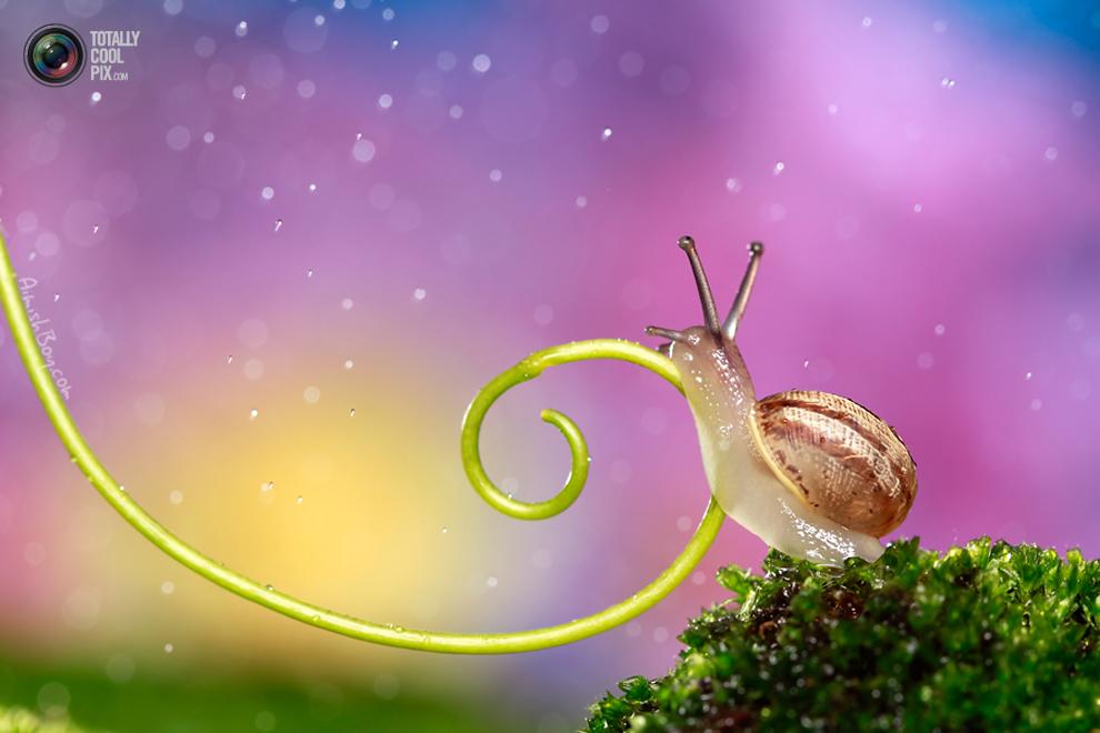 aimishboy 006 Удивительная макрофотография: неожиданно гламурные насекомые и многое другое