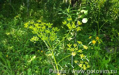 Огурцы малосольные с дикорастущими травами   , Шаг 01