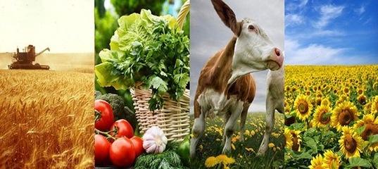 Экспортные достижения сельского хозяйства России в 2017 г.