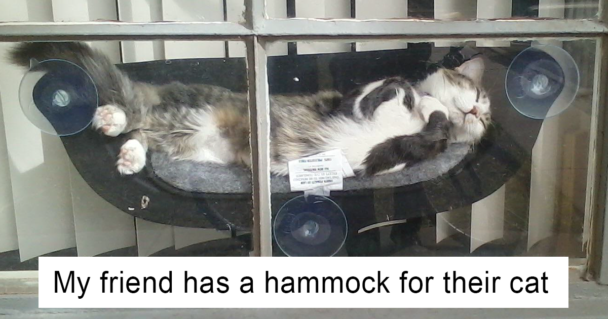 15+ Spoiled Cats That Probably Live Better Than You