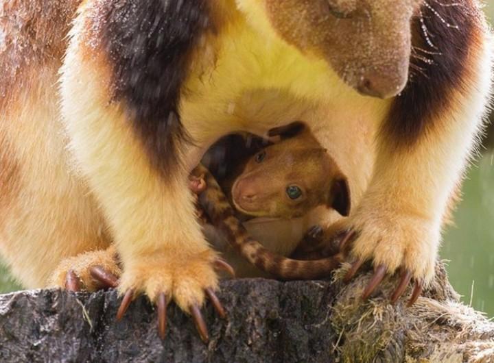Удивительный мир животных ! Рядом с мамой...