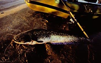савин рыбалка книга