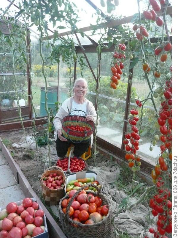 """Мои томатные """"страдания"""""""