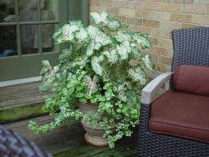Тенелюбивые растения для тенистых уголков сада