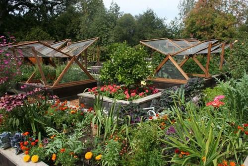 Декоративный огород с цветами