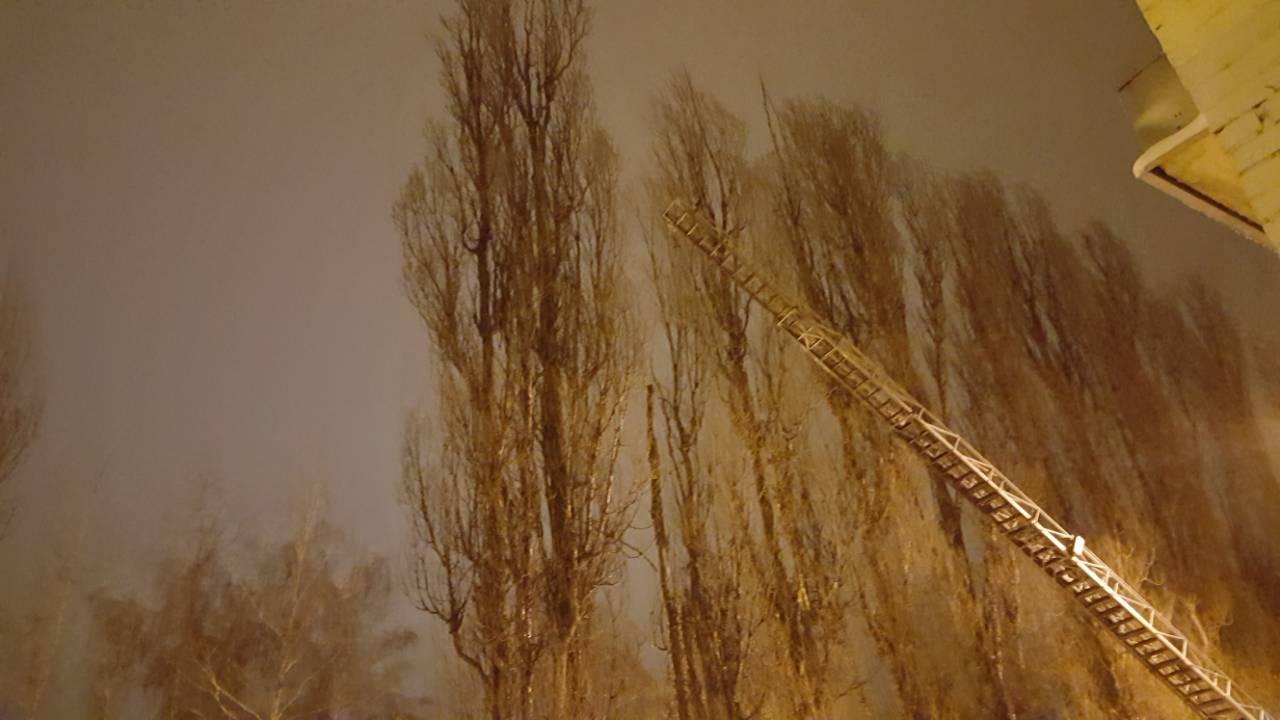 35 метров страха… Никто не понимал, как кот очутился на вершине, но потом открылась горькая правда