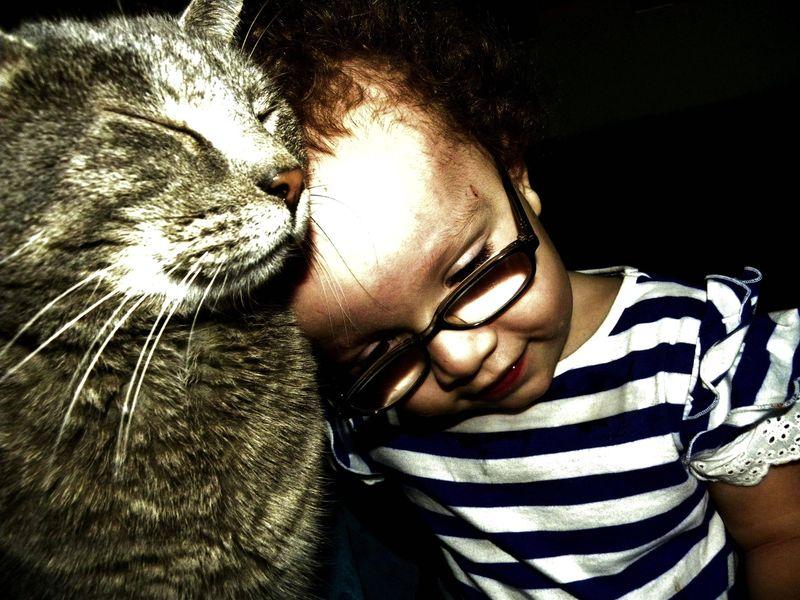 CatsGoldenHearts27 Почему мы любим кошек