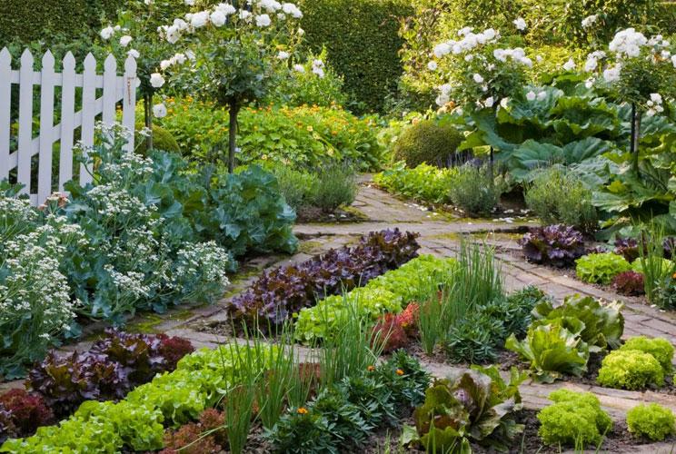 Красивый огород и сад
