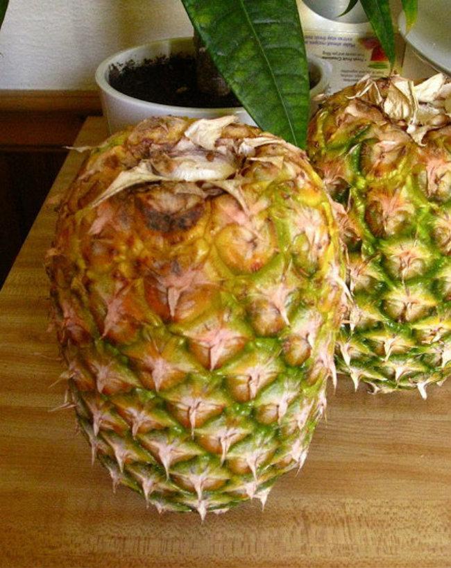 самом разгаре, как быстрее дозреть ананас малолетка