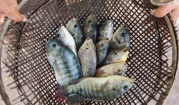 5 способов ловли рыбы без удочки