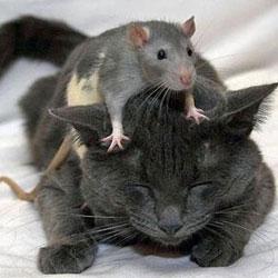 Крайне опасные животные с самой безобидной и милой внешностью