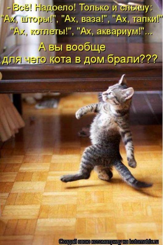 1481911543_kotomatrica-24