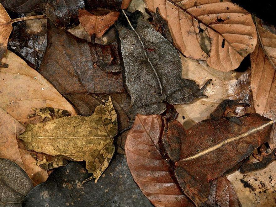 Camouflage05 Животные   мастера маскировки