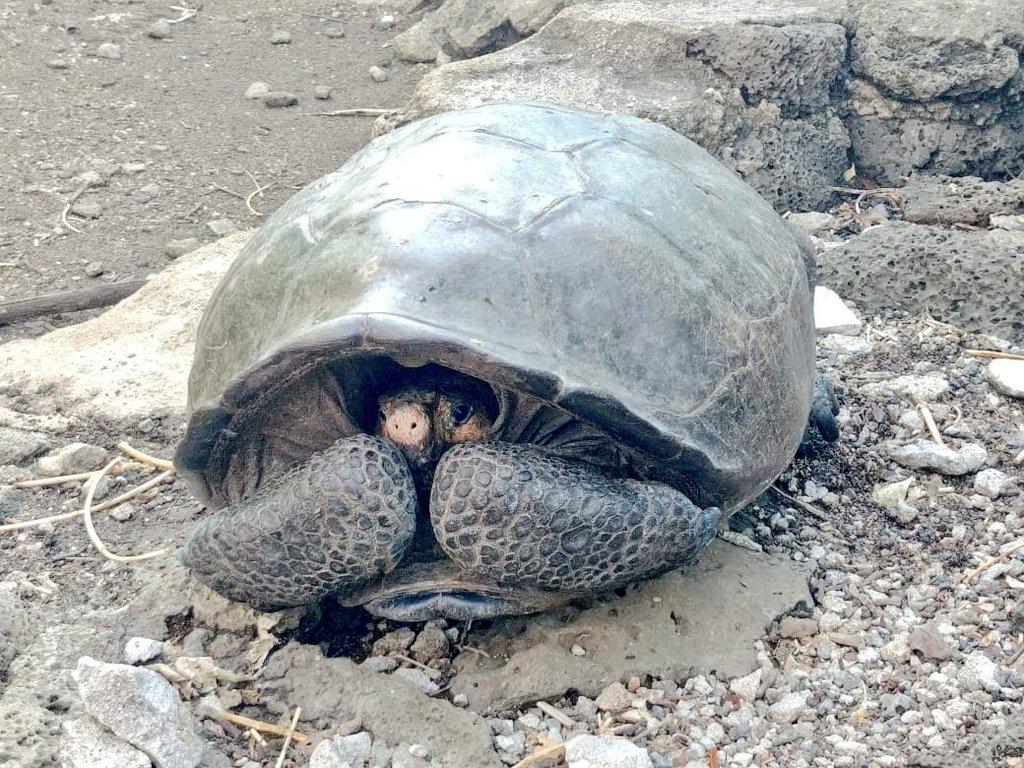Вымершая более сотни лет назад черепаха обнаружена живой