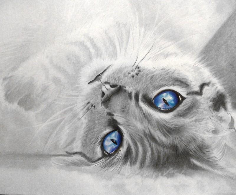 Рисунки карандашом. Автор работ Вероника Щеголева