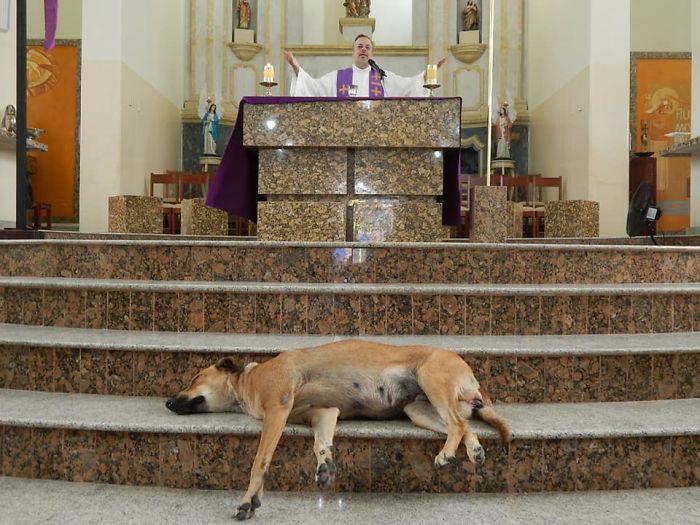 Пастырь из Бразилии во время службы пристраивает бездомных собак