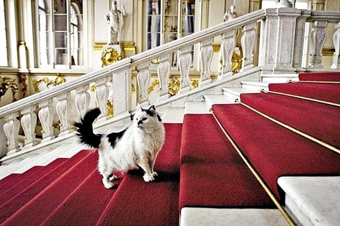 В Эрмитаже живет 70 кошек. | Фото: aveclassics.net.