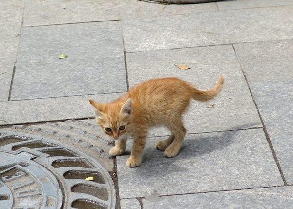 Жизнь котенка дороже денег! Женщина плюнула на работу и зарплату, спасая питомца из-под трамвая