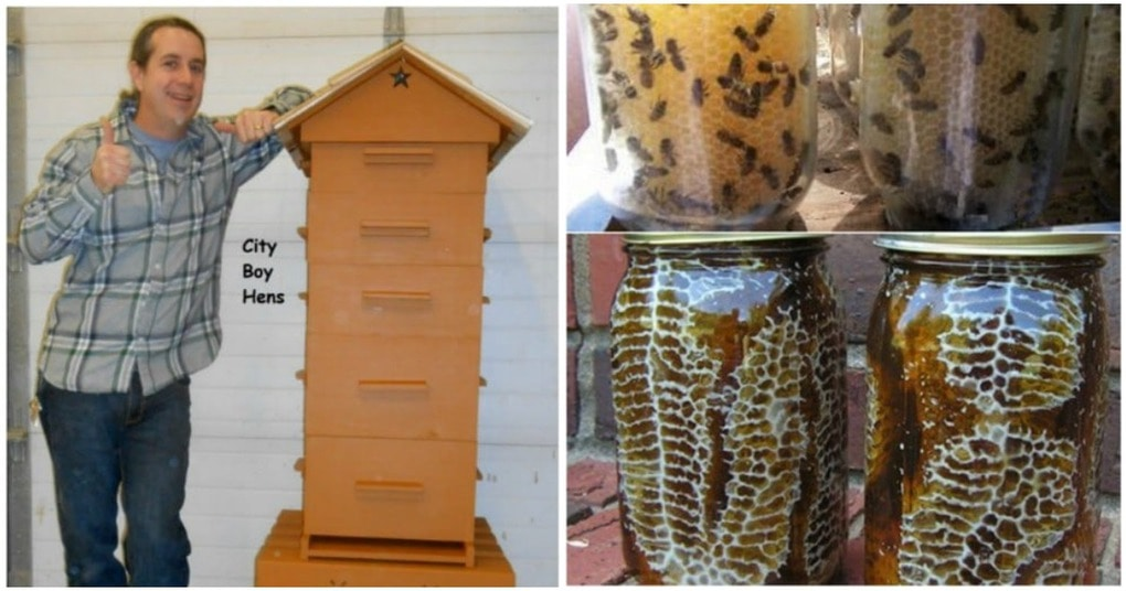 Ульи бывают и такими! 8 функциональных идей в помощь пчеловодам
