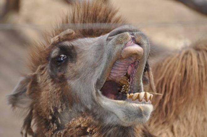 ТОП-25 самых уродливых животных на свете
