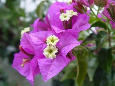 Вьющиеся комнатные цветы.