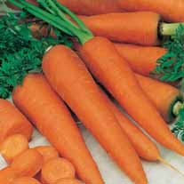 Добрым огородникам на заметку. Что нужно знать при посадке моркови?