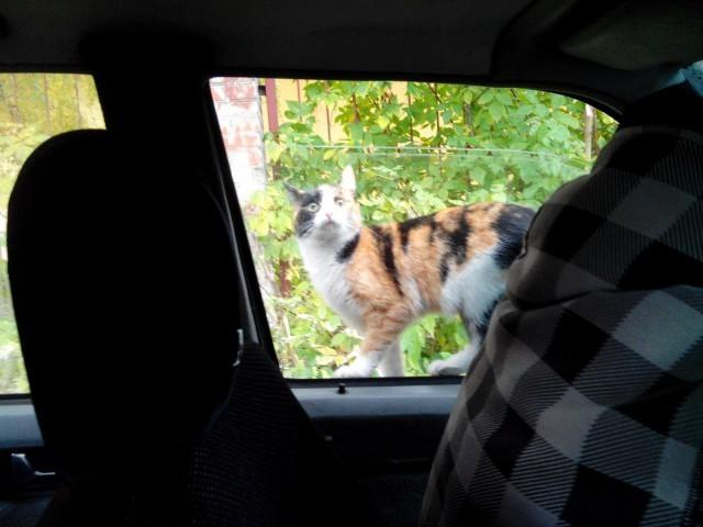 Сидели себе спокойно в машине, и вдруг…