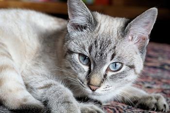 В Осло случайно попавший в стиральную машину кот выжил после 40 минут стирки