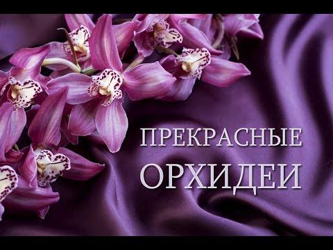 Прекрасные цветущие орхидеи