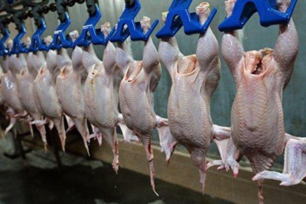 Армения временно ограничивает импорт свинины имяса птицы изРоссии