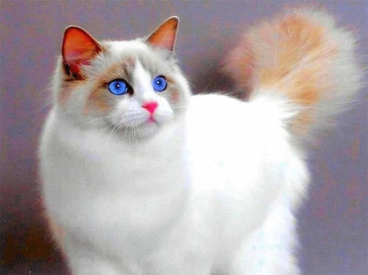 15 поверий о кошках