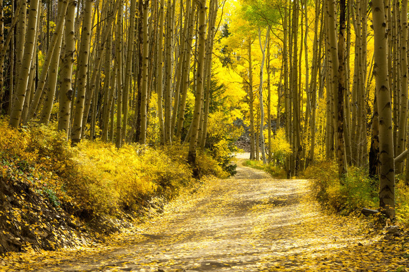 Дорога Последнего Доллара, Колорадо Северная Америка, путешествие, фотография